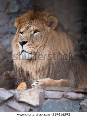 high-res picture of lion with an artistic background - stock photo