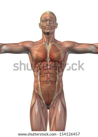 High resolution concept conceptual 3D human man structure with internal organs,digestive,lungs and circulatory system isolated on white background,metaphor to anatomy,body,medical,health or biological - stock photo