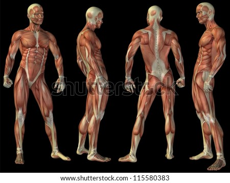 High resolution concept or conceptual human or man 3D anatomy body with muscle isolated on black background as metaphor to medicine,sport,male ,muscular,medical,health,biology or fitness group or set - stock photo