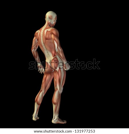 High resolution concept or conceptual human or man 3D anatomy body with muscle isolated on black background as a metaphor to medicine,sport,male,muscular,medical,health,biology or fitness - stock photo