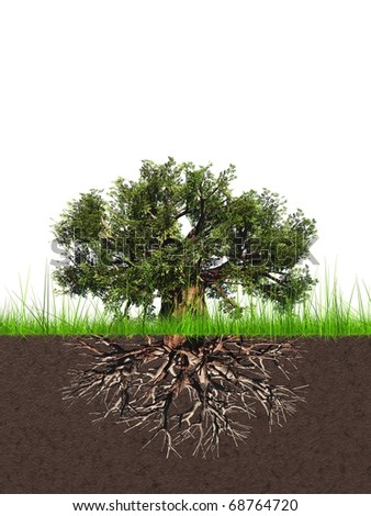 High resolution conceptual old baobab tree with a root - stock photo