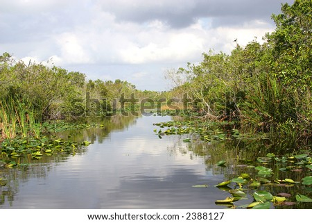 High resolution image of a waterway in the everglades Florida - stock photo