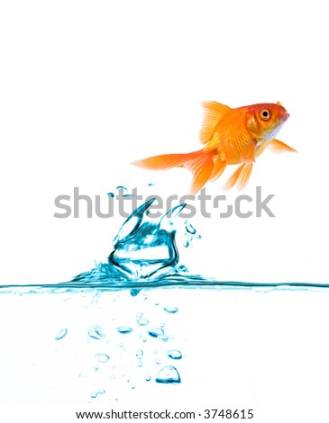 High resolution image of fish jumping up. - stock photo