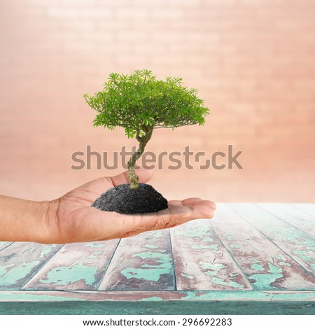 High resolution little green tree in human hand palm up with black soil over vintage wood pane and blur brick wall background with flare lighting effect - stock photo