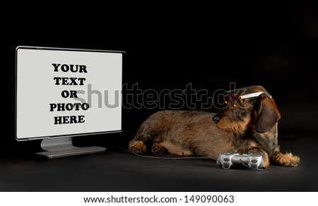 High Tech Dog - Dachshund playing with gaming system looking at monitor isolated on black background - stock photo