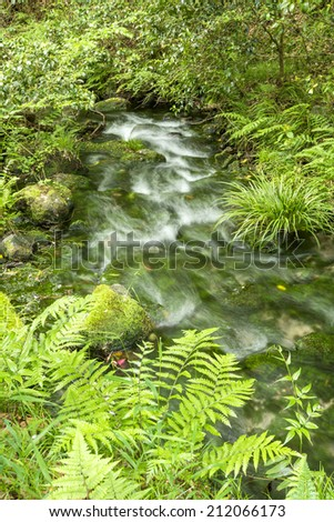 High transparency brook that lush green aquatic plants in vertical composition - stock photo