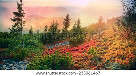 highland vegetation modest summer and unusually beautiful colors blooms in autumn, before cold weather. Blueberries- bright red, coniferous forest green, orange buk- mountains sinie- fantastic charm. - stock photo