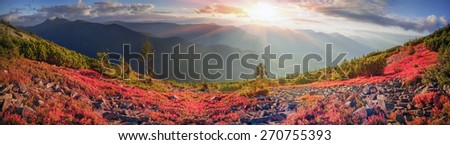 highland vegetation modest summer and unusually beautiful colors blooms in autumn, before cold weather. Blueberries, bright red, coniferous forest green, orange buk- mountains sinie- fantastic charm. - stock photo