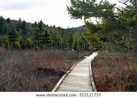 Hiker on Cranberry Glades boardwalk - stock photo