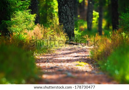 Hiking forest path through thick woods during spring, Sweden - stock photo