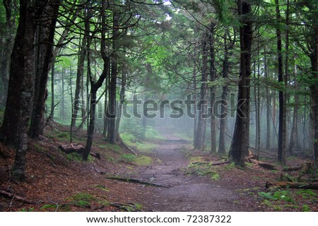 hiking in fundy national park in new brunswick, canada - stock photo