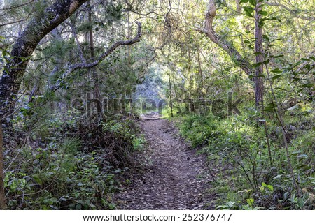 hiking in the woods at sunrise / sunset - stock photo