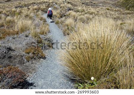 Hiking path in Tongariro National Park, New Zealand. - stock photo