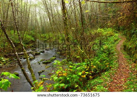 Hiking trail along an Oregon Stream - stock photo