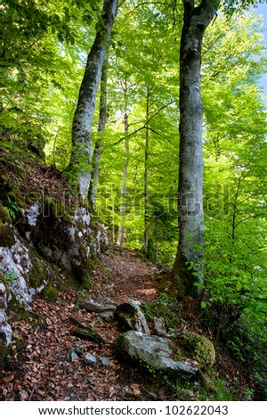 Hiking trail in fresh spring forest - stock photo