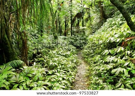 Hiking trail in tropical jungle - stock photo