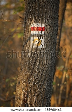 Hiking trail signs in the forest - stock photo