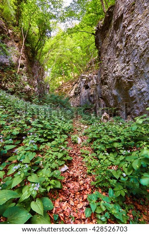 Hiking trail through a bed of mountain flowers in a gorge - stock photo