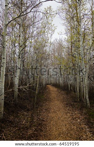 Hiking trail through aspens in the fall - stock photo