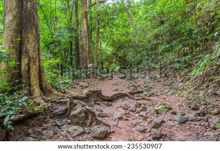 Hiking trail through the forest, Thailand - stock photo