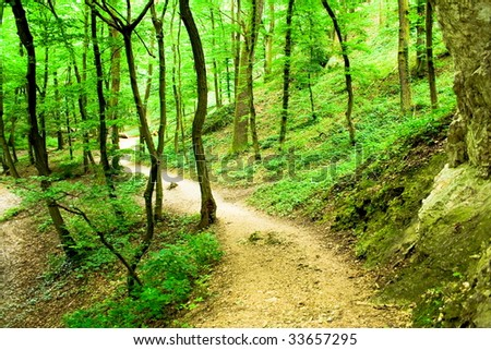 hiking trail with rocks in the green forest - stock photo