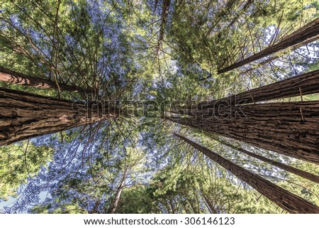 Hiking, walking, biking, & enjoying the coastal redwood trees & forest trails & paths, close to the Big Sur Highway (California State Highway 1), on California Central Coast, near Limeklin State Park. - stock photo