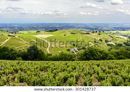 Hill and vineyards during a sunny day, Beaujolais, France - stock photo