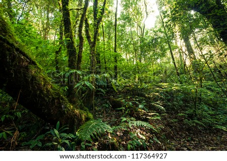 Hill Evergreen Forest of Doi Inthanon, Chiang Mai, Thailand - stock photo