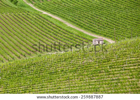 Hill of Toscana With Vineyard In The Chianti Region - stock photo