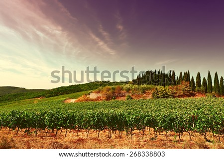 Hill of Tuscany with Vineyard in the Chianti Region at Sunset, Vintage Style Toned Picture - stock photo