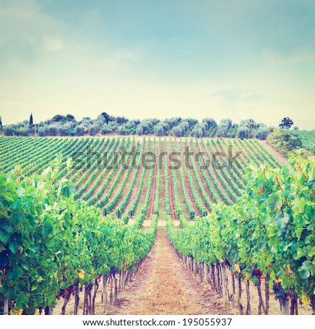 Hill of Tuscany with Vineyard in the Chianti Region, Retro Effect - stock photo