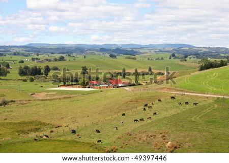 Hills and meadows of New Zealand. Green pastures and a farm with cows grazing in Wanganui district. - stock photo