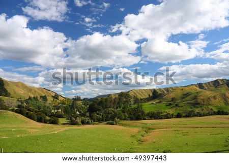 Hills and meadows of New Zealand. Green pastures with sheep grazing in Wanganui district. - stock photo