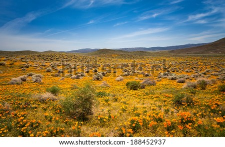 Hills and valleys of the desert in the Antelope Valley during the spring wildflower bloom - stock photo