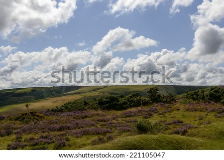 hilly Exmoor landscape hilly landscape with moor flowers under a bright cloudy sky  - stock photo