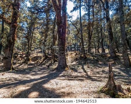 Himalayan foot path through the woods, India. - stock photo