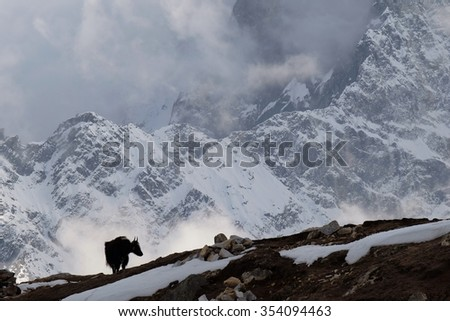 Himalayan Mountain Yak silhouette in evening mist at Lobuche, near Everest Base Camp, Upper Khumbu, Nepal. This telephoto view compresses the distance of Mt. Tobuche shoulder, 6 km away.  - stock photo