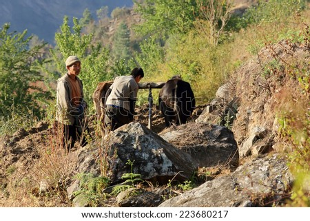 HIMALAYAS, NEPAL, MARCH 20: Nepalese farmers plowing his field with two yak. Everest region, Himalayas, in Nepal on March 20, 2014 - stock photo