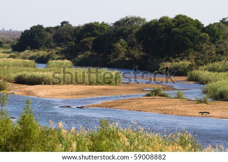 Hippos and crocodiles in the sabie river, south africa - stock photo