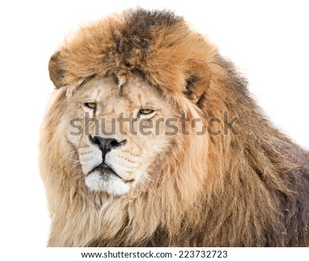 His majesty lion - stock photo