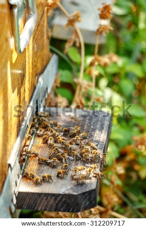Hives in an apiary with bees flying to the landing boards in a garden in autumn - stock photo
