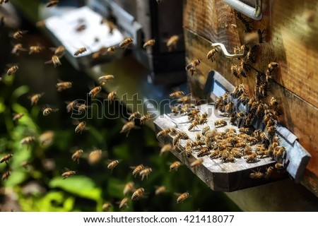 Hives in an apiary with bees flying to the landing boards in a green garden - stock photo