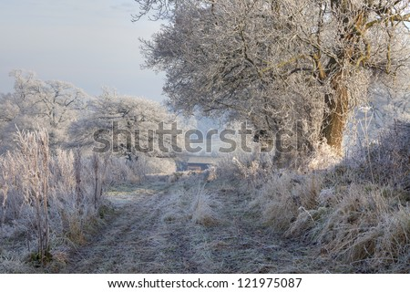 Hoar frost, English countryside - stock photo