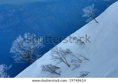 Hoarfrost - stock photo