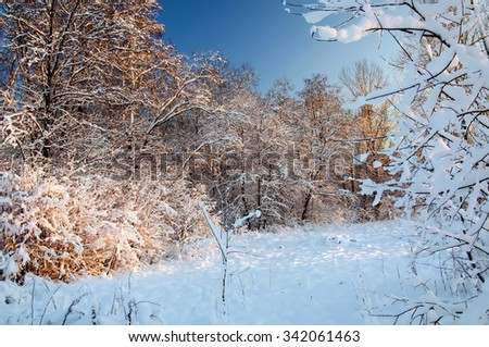 Hoarfrost and Rime on trees. Sunset in the winter forest. Frost and snow on the branches. Beautiful winter nature. Panorama of the winter forest. Winter landscape.  New year's fairy tale. - stock photo