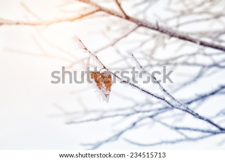 Hoarfrost and snow on the trees in winter forest. Beautiful winter nature. Soft focus - stock photo