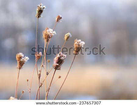 Hoarfrost on autumn plants. Abstract nature blurred background - stock photo
