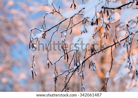 Hoarfrost on branches. Beautiful world. Winter, rime on trees. Sunset in the winter forest. Frost and snow on the branches. Beautiful winter nature. Pink rays of the sun. New year's fairy tale. - stock photo