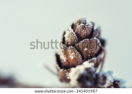Hoarfrost on the fir cone. Macro image. Beautiful winter nature. Small depth of sharpness - stock photo