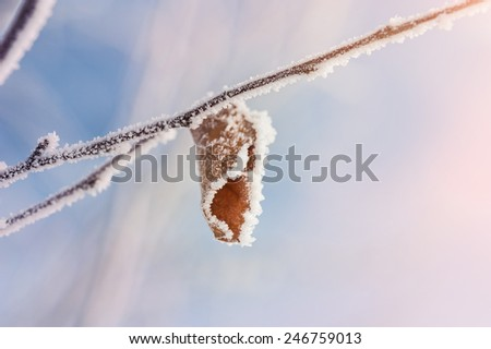 Hoarfrost on the tree in winter forest. Beautiful winter nature. Macro image. Small depth of sharpness - stock photo